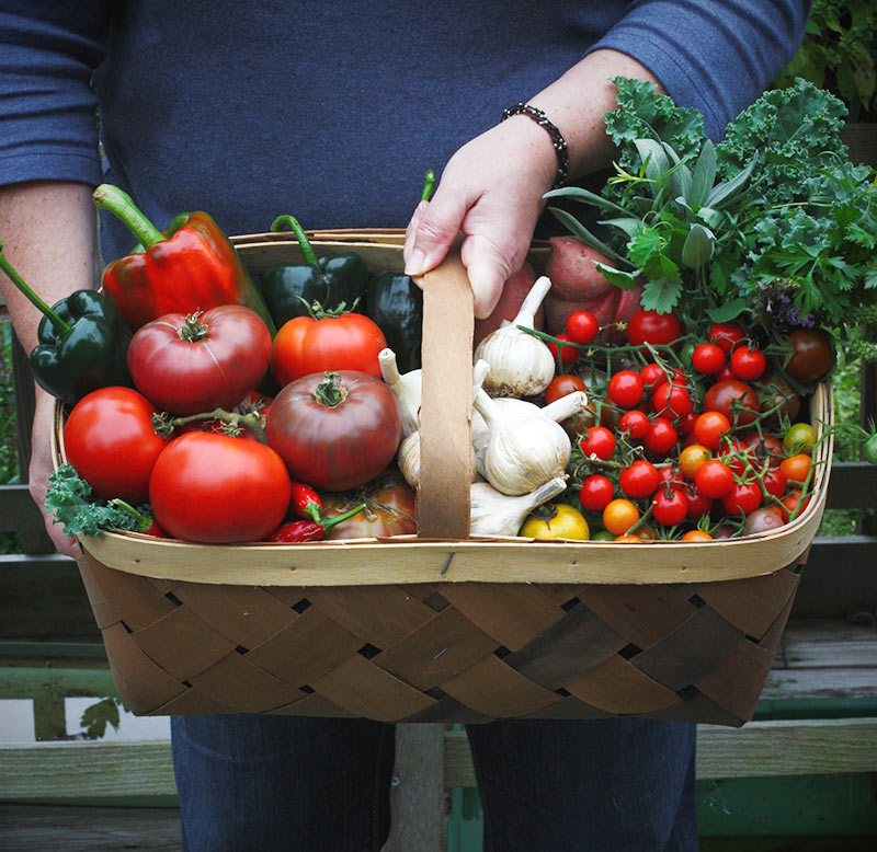 Homegrown tomatoes, garlic, peppers, and herbs in a basket