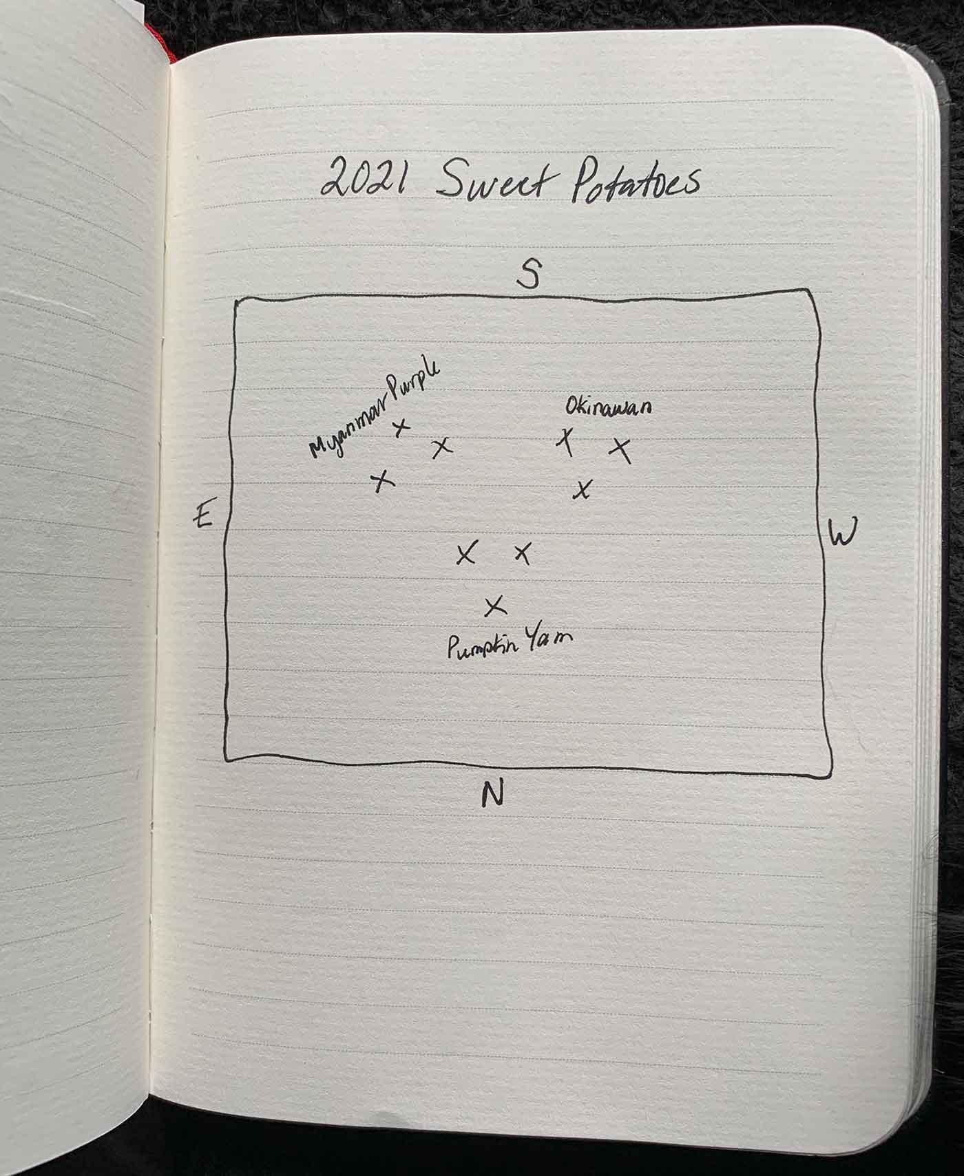 Rough layout of sweet potato plot.