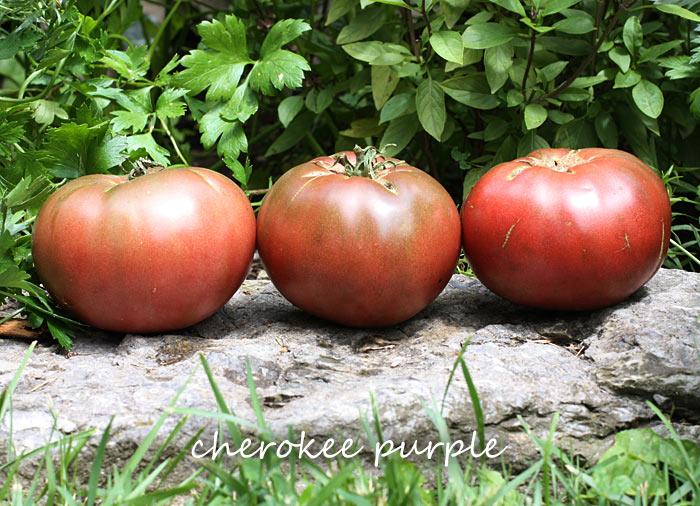 Three beautiful, ripe Cherokee Purple tomatoes positioned on a rock.